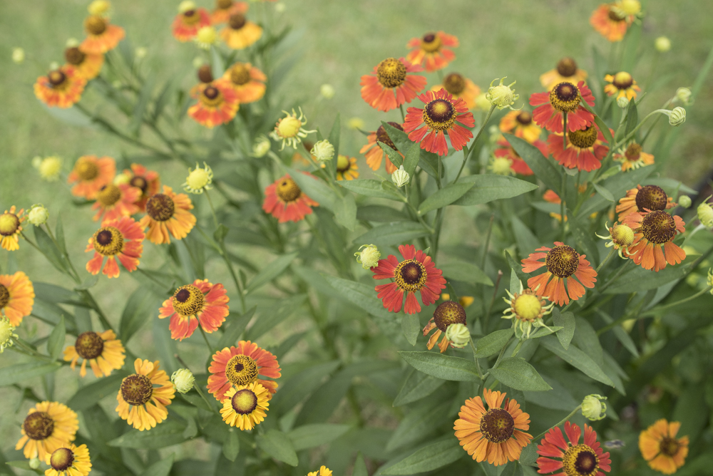 Flowers-1997